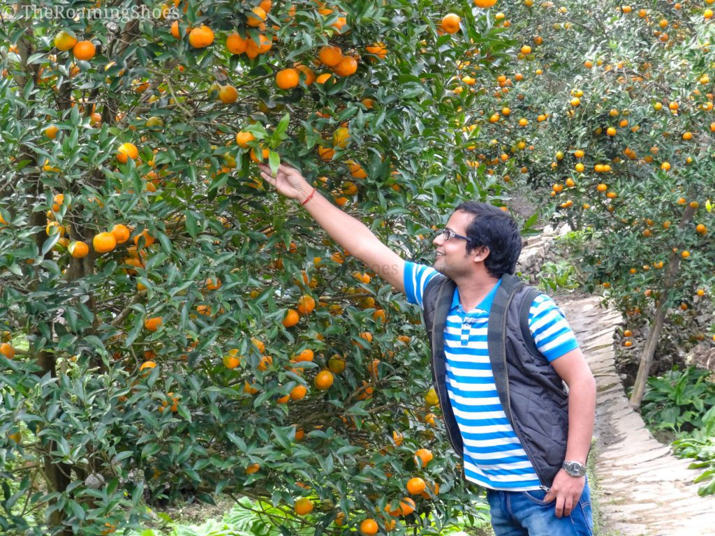 Having a close look at the oranges