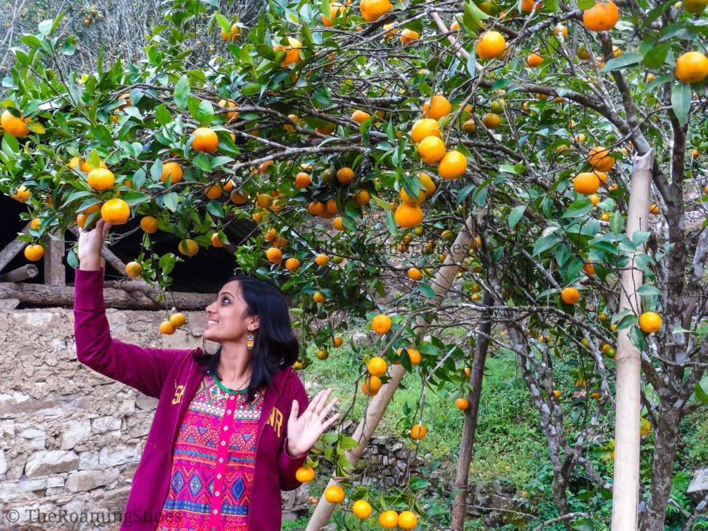 Oranges of Chhota Mangwa