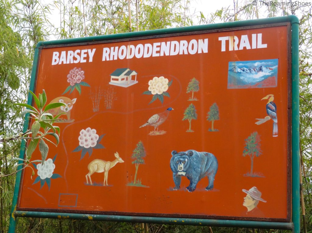 Varsey Rhododendron Trail
